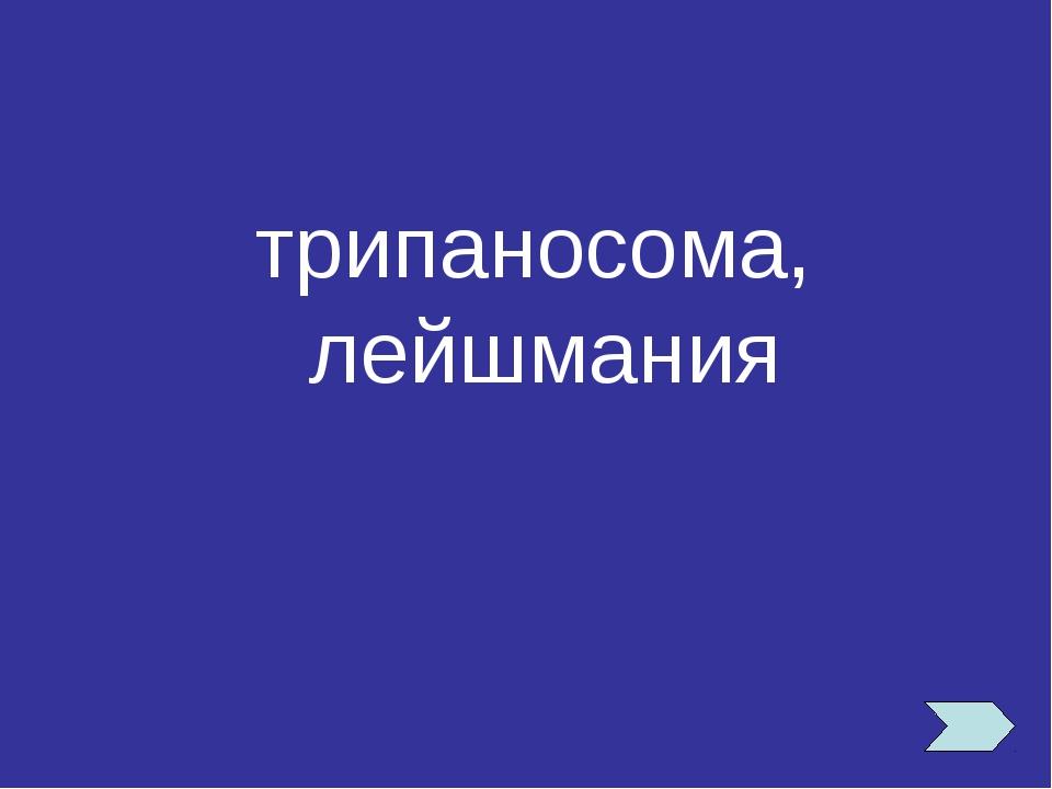 трипаносома, лейшмания