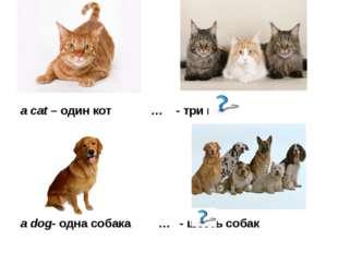 a cat – один кот … - три кота a dog- одна собака … - шесть собак
