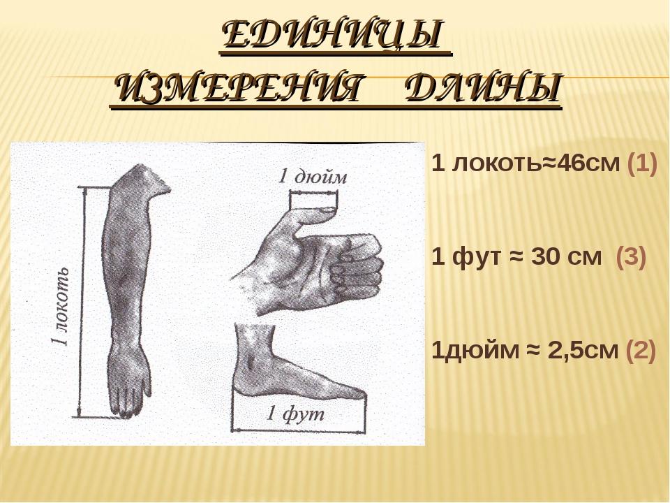 ЕДИНИЦЫ ИЗМЕРЕНИЯ ДЛИНЫ 1 локоть≈46см (1) 1 фут ≈ 30 см (3) 1дюйм ≈ 2,5см (2)