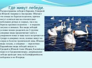 Где живут лебеди. Распространены лебеди в Евразии, Северной и Южной Америке и