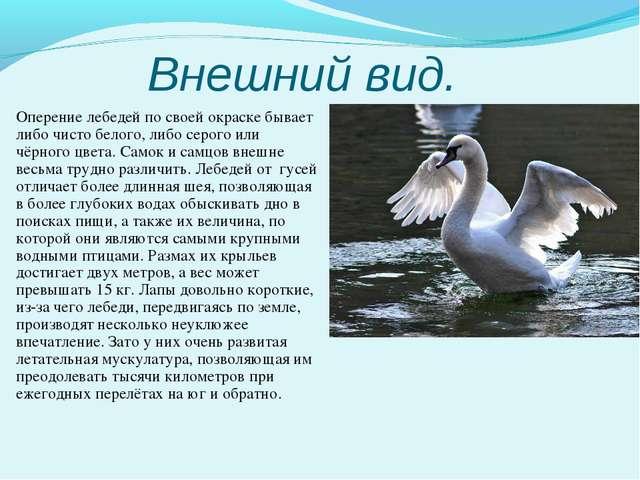 Внешний вид. Оперение лебедей по своей окраске бывает либо чисто белого, либо...