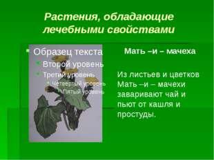 Растения, обладающие лечебными свойствами Мать –и – мачеха Из листьев и цветк
