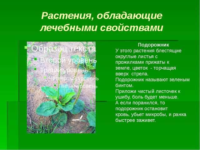 Растения, обладающие лечебными свойствами Подорожник У этого растения блестящ...
