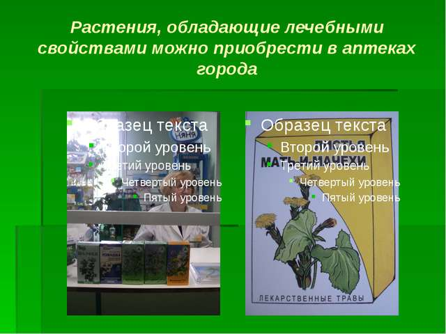 Растения, обладающие лечебными свойствами можно приобрести в аптеках города