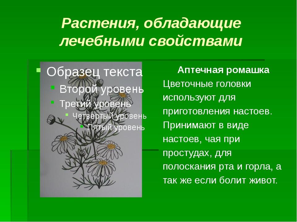 Растения, обладающие лечебными свойствами Аптечная ромашка Цветочные головки...