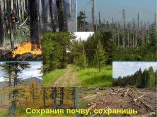 Сохранив почву, сохранишь лес!