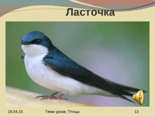 Ласточка Тема урока: Птицы