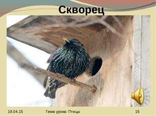 Скворец Тема урока: Птицы