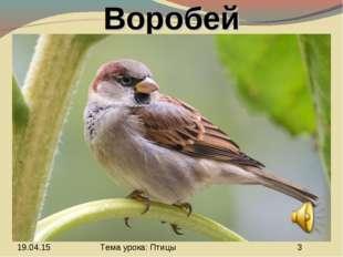 Воробей Тема урока: Птицы