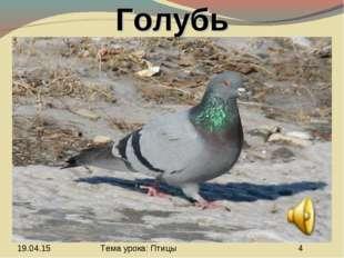 Голубь Тема урока: Птицы