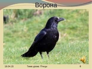 Ворона Тема урока: Птицы