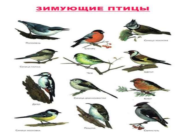 Тема урока: Птицы
