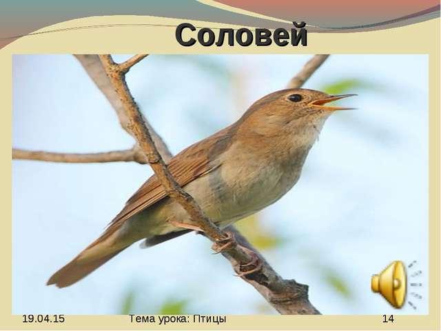 Соловей Тема урока: Птицы