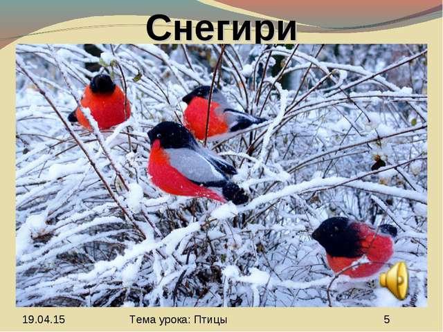 Снегири Тема урока: Птицы