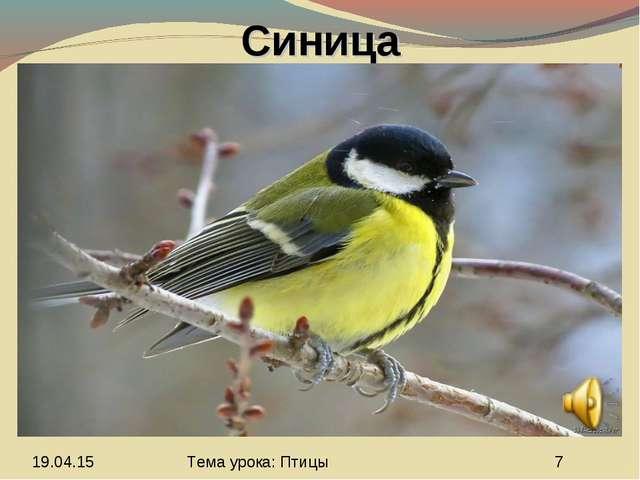 Синица Тема урока: Птицы