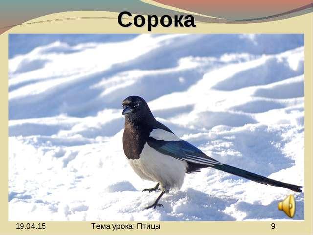 Сорока Тема урока: Птицы