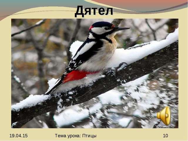 Дятел Тема урока: Птицы