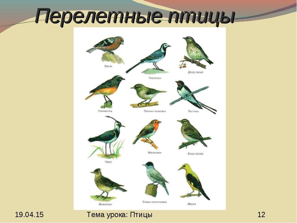 Перелетные птицы Тема урока: Птицы