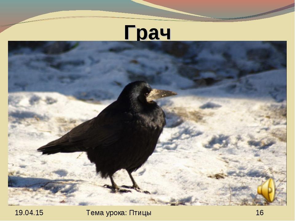 Грач Тема урока: Птицы