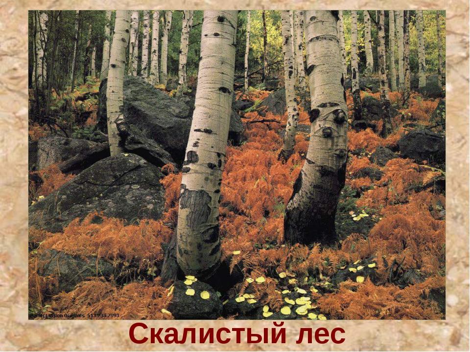 Скалистый лес
