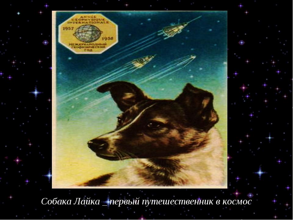 Собака Лайка _ первый путешественник в космос