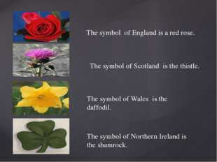 The symbol of England is a red rose. The symbol of Scotland is the thistle. T