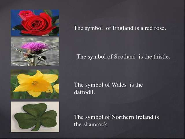 The symbol of England is a red rose. The symbol of Scotland is the thistle. T...
