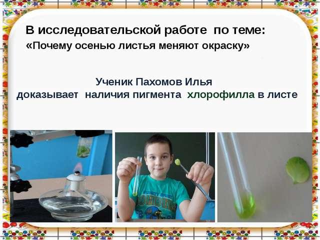 Ученик Пахомов Илья доказывает наличия пигмента хлорофилла в листе В исследов...