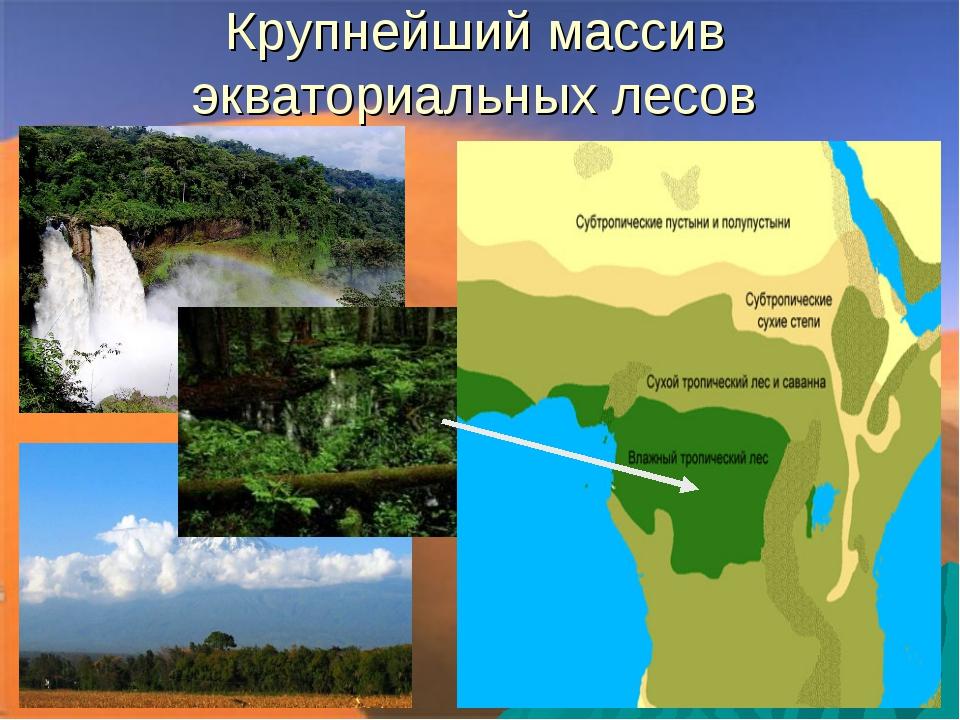 Крупнейший массив экваториальных лесов