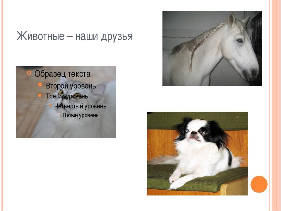 Животные – наши друзья