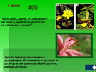 Какие есть цветы по строению? Как можно разделить растения по строению цвето