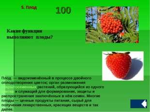 Какие функции выполняют плоды? Плод — видоизменённый в процессе двойного опл