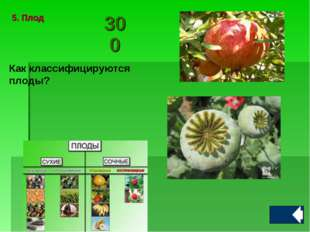 Как классифицируются плоды? 5. Плод300