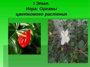 I Этап. Игра: Органы цветкового растения