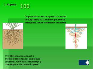 Определите типы корневых систем по картинкам. Назовите растения, имеющие таки