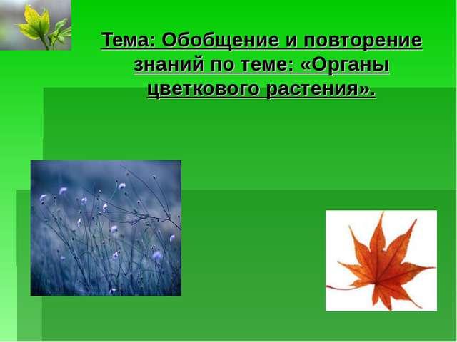 Тема: Обобщение и повторение знаний по теме: «Органы цветкового растения».