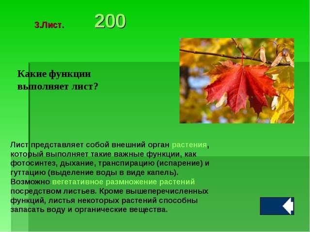 Какие функции выполняет лист? Лист представляет собой внешний орган растения,...