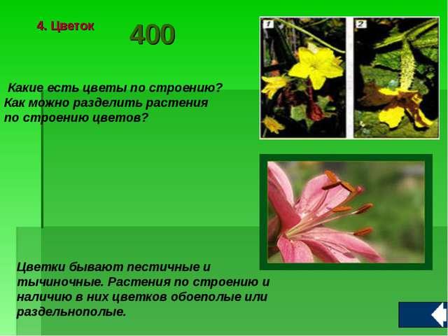 Какие есть цветы по строению? Как можно разделить растения по строению цвето...