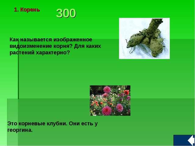 Как называется изображенное видоизменение корня? Для каких растений характерн...