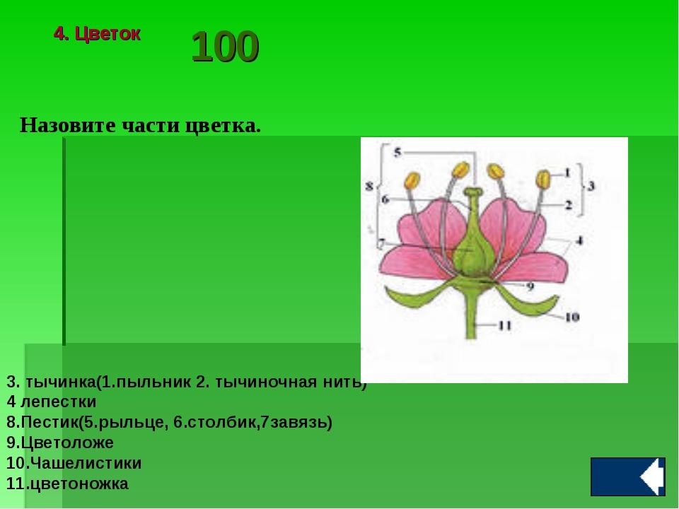 Назовите части цветка. 3. тычинка(1.пыльник 2. тычиночная нить) 4 лепестки 8....