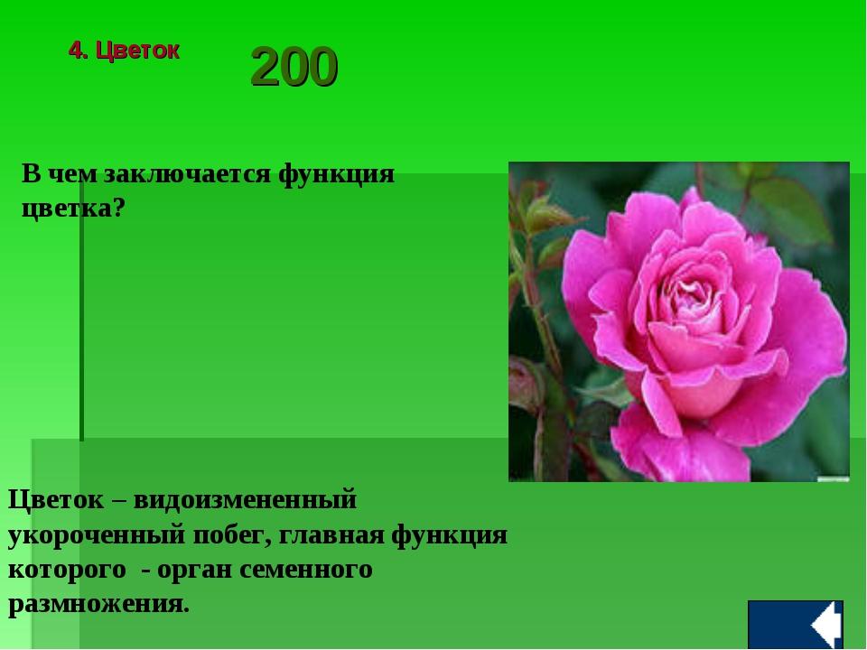 В чем заключается функция цветка? Цветок – видоизмененный укороченный побег,...