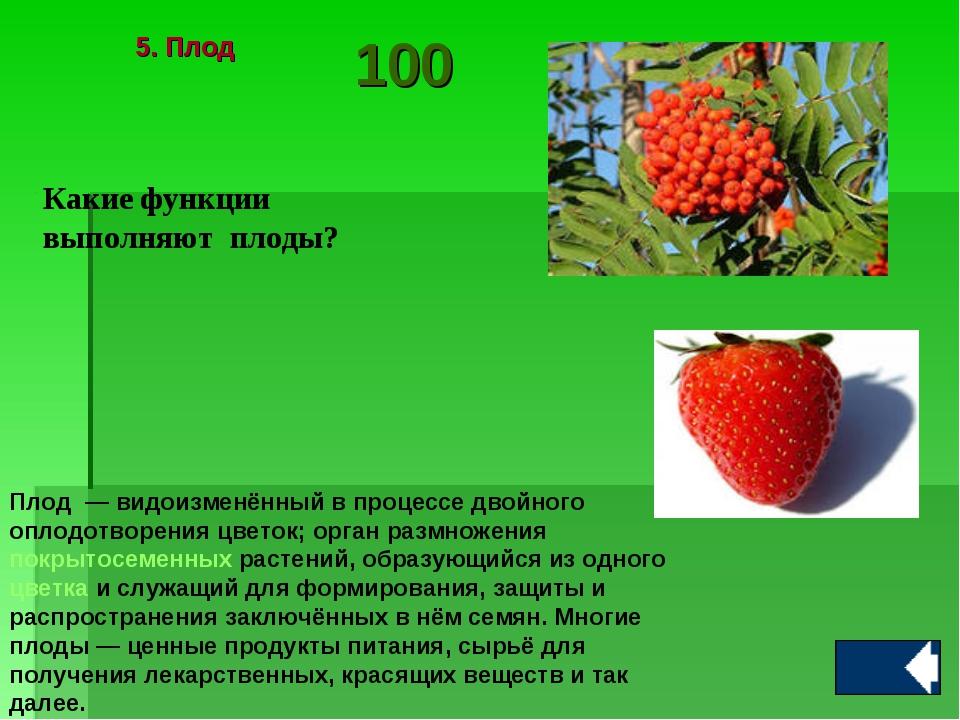 Какие функции выполняют плоды? Плод — видоизменённый в процессе двойного опл...