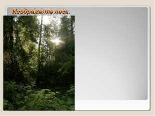 Изображение леса.