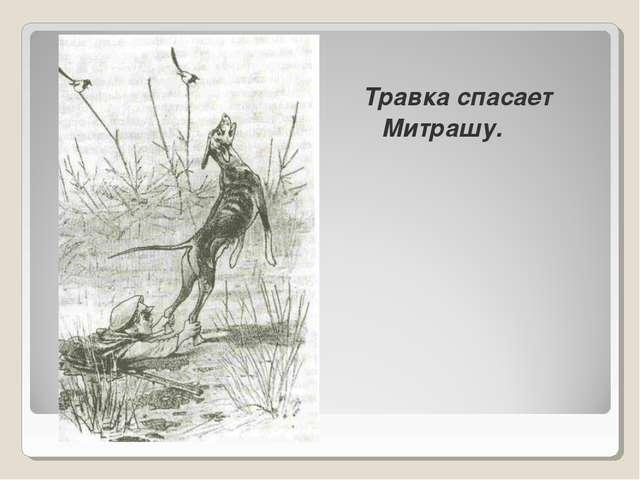 Травка спасает Митрашу.