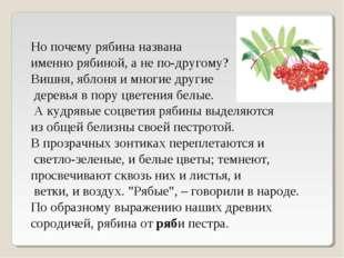 Но почему рябина названа именно рябиной, а не по-другому? Вишня, яблоня и мно