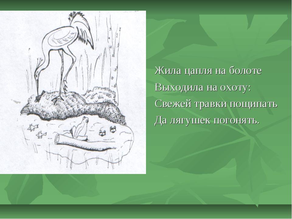 Жила цапля на болоте Выходила на охоту: Свежей травки пощипать Да лягушек пог...