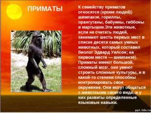 ПРИМАТЫ К семейству приматов относятся (кроме людей)) шимпанзе, гориллы, оран