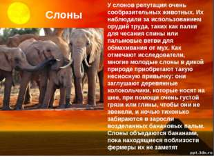 Слоны У слонов репутация очень сообразительных животных. Их наблюдали за испо