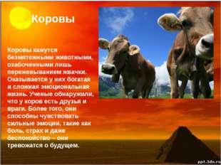 Коровы Коровы кажутся безмятежными животными, озабоченными лишь пережевывание