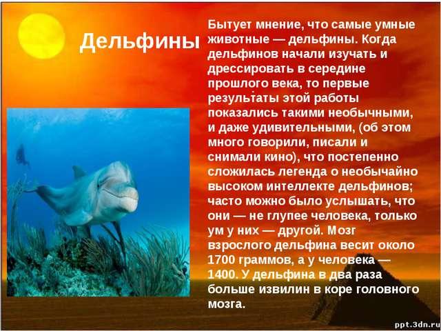 Дельфины . Бытует мнение, что самые умные животные — дельфины. Когда дельфино...